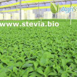 plantas-vivero-agristevia